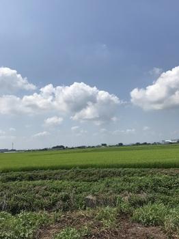 8月の田.jpg